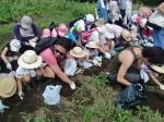 H270720親子農業体験ジャガイモ掘り (24)