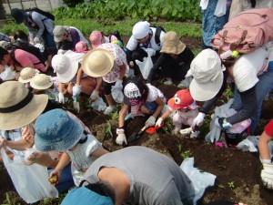 H270720親子農業体験ジャガイモ掘り (26)