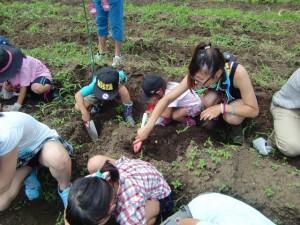 H270720親子農業体験ジャガイモ掘り (48)