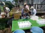 H270720親子農業体験ジャガイモ掘り (5)
