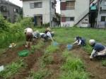 H270810ジャガイモ・トマト収穫 (14)