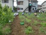 H270810ジャガイモ・トマト収穫 (15)