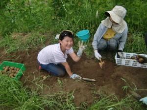 H270810ジャガイモ・トマト収穫 (4)