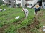 H270810ジャガイモ・トマト収穫 (7)