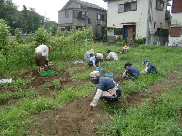 H270810ジャガイモ・トマト収穫 (13)