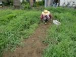 H270810ジャガイモ・トマト収穫 (3)