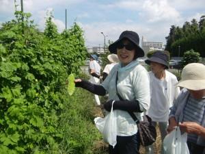 H270904いやし収穫体験 (10)