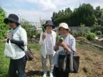 H270904いやし収穫体験 (11)