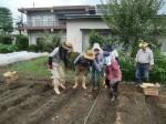 H270915ジャガイモの種植え付け (1)