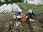 H270915ジャガイモの種植え付け (10)