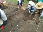 H270915ジャガイモの種植え付け (5)