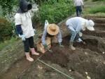 H270915ジャガイモの種植え付け (8)