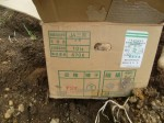 H270915ジャガイモの種植え付け (13)