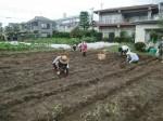 H270915ジャガイモの種植え付け (14)