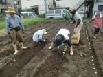 H270915ジャガイモの種植え付け (15)