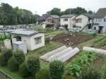 H270915ジャガイモの種植え付け (18)