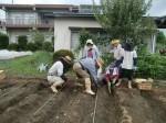 H270915ジャガイモの種植え付け (2)