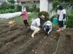 H270915ジャガイモの種植え付け (3)