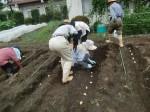H270915ジャガイモの種植え付け (9)