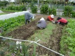 H211021農園作業サツマイモツルカリ (19)