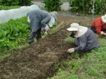 H211021農園作業サツマイモツルカリ (20)