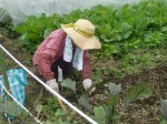 H211021農園作業サツマイモツルカリ (21)