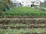 H211021農園作業サツマイモツルカリ (1)