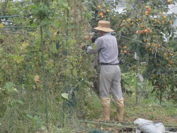 H261007農園作業 (11)