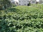 H261007農園作業 (16)