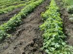 H261007農園作業 (4)
