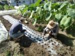 H261007農園作業 (2)