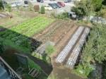 H261007農園作業 (21)