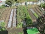 H261007農園作業 (23)
