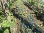 H271004農作業 (18)