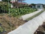 H271004農作業 (20)