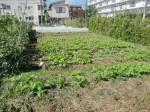 H271004農作業 (31)