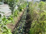 H271004農作業 (38)
