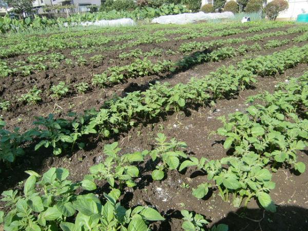 H271004農作業 (8)