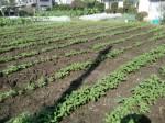 H271004農作業 (9)