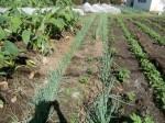 H271004農作業 (10)