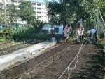 H271004農作業 (2)