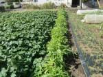H271004農作業 (32)