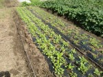 H271004農作業 (33)
