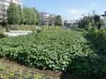 H271004農作業 (34)