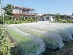 H271004農作業 (40)