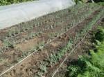 H271004農作業 (5)