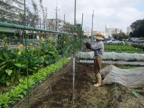 H271018野島農園 (4)