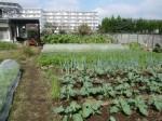H271018野島農園 (9)