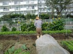 H271018野島農園 (3)