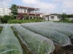H271018野島農園 (7)